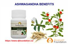 Plant Name - Ashwagandha Scientific name - Withania somnifera Common names- Ashwagandha, Indian gins Types Of Diseases, Common Names, Ayurvedic Medicine, Benefit, Herbalism, Health Care, Plant Leaves, Berries, Foundation