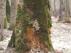 dead tree - full of life ...