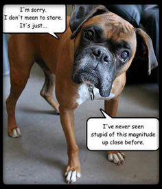 dog sayings boxers | Funny Boxer Dog Refrigerator Magnet Tool Box Magnet Magnetic Board ...