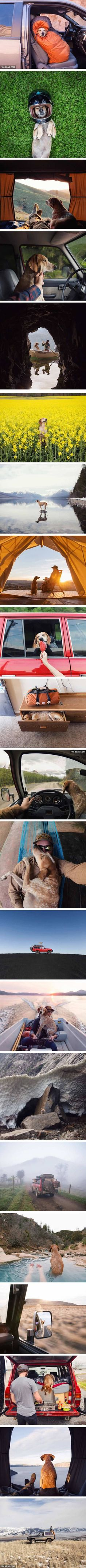 This human is almost as good as a dog . . . . . . . Rescued Dog Maddie Goes On Epic Adventures With His Photographer Owner Theron Humphrey
