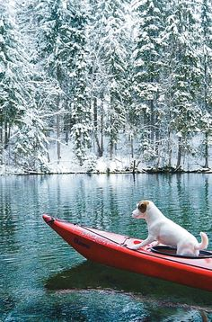 Cutest Jack russel terrier doggo canoeing at a frozen lake. Winter wonderland dog photography. Hiking with dog.