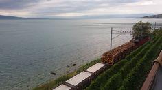 www.bringhand.de/blog    Beim Road Trip entlang des Genfer Sees kann man viel entdecken. Einen Holztransport, die Weinberge, die Autos und den See selbst natürlich ....    #switzerland #lausanne #genfersee #roadtrip #zug #holz #Holztransport #logistik #Schweiz #Wochenende #Deutschland #Österreich #Berlin #München #Köln #Wien #Zürich #Bringhand #Folgen #Urlaub #Wanderlust #Reisen #Fernweh #Autoreise #Italien #Genève #Genf #Geneva #lacLéman #Genfersee #Suisse