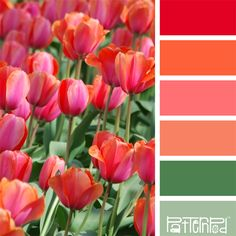 Color Palettes, Tulips, Pink, Coral, Green Love that bottom green. House Color Schemes, Colour Schemes, House Colors, Color Combos, Color Harmony, Color Balance, Tulip Colors, Inspiration Design, Colour Pallette