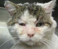 Kill List, What Cat, My Animal, I Love Cats, Animal Rescue, Pet Adoption, Pup, Dog Cat, Kitty