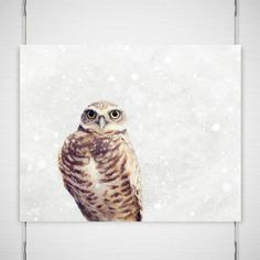 """Holiday Owl Photography / winter snow snowy forest / brown tan white grey gray / cute woodland woods / 8x10 photograph print / """"Snow Day"""""""