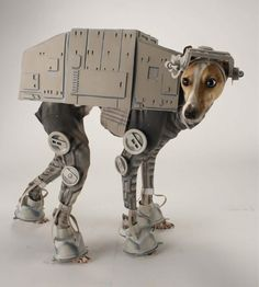 AT-AT Dog?! Here's a costume LAIKA/house artist Katie Mello (of robot pumpkin fame) made for her dog, Bones.  #StarWars