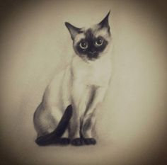 #cattattoo #cat #tattoo #blackandwhite #sketch
