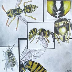 Insect Drawing / Framing and Composition Study - Conway High School Art Project