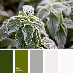 color match for home, dark green, grey, hoarfrost color, leaves color, olive, shades of green, shades of grey