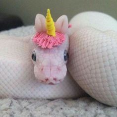 Cute Funny Animals, Funny Cute, Hilarious, 9gag Funny, Snakes With Hats, Baby Snakes, Animals And Pets, Baby Animals, Pink Animals