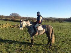 Connemara Pony Club Pony Price:£ 1,850 Horse's name: Nollaig's Pet Age:6 yrs 8 mths
