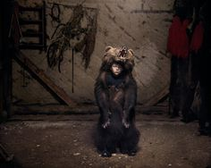 Haunting Photos of a Crumbling Post-Communist World | Ciprian the Bear Dancer, in Salatruc, East Romania, 2013.  Tamas Dezso, courtesy of Robert Koch Gallery, San Francisco  | WIRED.com