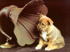 子犬のワルツでも聴いているのでしょうか。