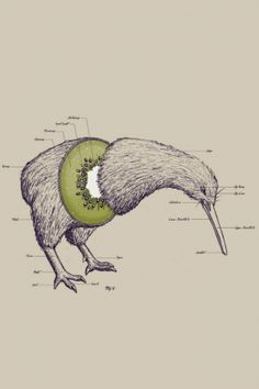 Funny pictures about Anatomy of a Kiwi. Oh, and cool pics about Anatomy of a Kiwi. Also, Anatomy of a Kiwi photos. Art And Illustration, Technical Illustration, Art Maori, Kiwi Bird, Kiwiana, Anatomy Art, Animal Anatomy, Grafik Design, Art Design