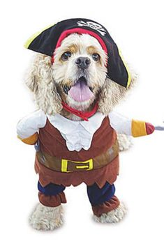 Funny Pet Clothes Pirate Dog Cat Cosplay Costume Suit Corsair Dressing up Party Apparel for Cat Dog -- Continue to the product at the image link. (This is an affiliate link and I receive a commission for the sales) Chat Halloween, Halloween Suits, Pet Halloween Costumes, Pet Costumes, Halloween Christmas, Pirate Halloween, Halloween Clothes, Funny Costumes, Halloween 2015
