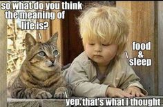 Funny pictures about What's the meaning of life? Oh, and cool pics about What's the meaning of life? Also, What's the meaning of life? Funny Shit, Funny Cute, The Funny, Hilarious, Funny Stuff, Cat Stuff, Funny Things, Funny Boy, Funny Babies