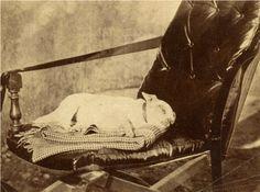 Victorian Post-Mortem Photography | victorian-post-mortem-photography-skull-illusion-pets-dog-chair