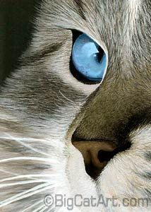 Can you believe this is color pencil? So realistic.....http://www.pinterest.com/kristen_dempsey/cat-lovers-art/