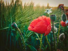 #flowers #flower #flowerstagram #flower_perfection #lubiepolske #ig_poland #poland #kwiaty #artystycznapodroz #igerspoland #olympustg5