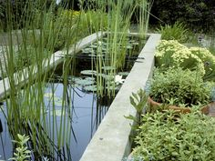 How to Make a Container Water Garden   Landscaping Ideas and ...