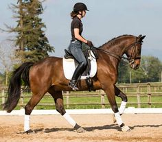 Unexpected | Dressage Horses For Sale | DressageMarket.com