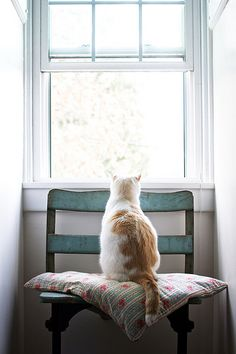 CAT ON A CHAIR LOOKING OUT ON THE BIG WORLD........LIKES HIS PROTECTED WORLD INSIDE SO MUCH BETTER, THANK YOU VERY MUCH........ccp