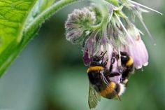 A two-year study of farms in West Sussex and Hampshire found that England's most common bumblebee species saw significant population growth where targeted, bee-friendly planting schemes were in place.