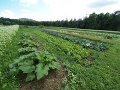 Timing Plantings at a CSA Farm: Minimizing Holes