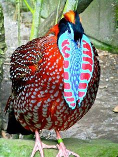 aves+exoticas+del+mundo.jpg (300×400)