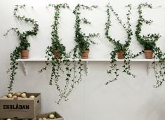 This would be fun - topiaries to spell words.