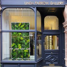 Moss Wall Art as a decorative Window Display with assorted Preserved mosses and Fern