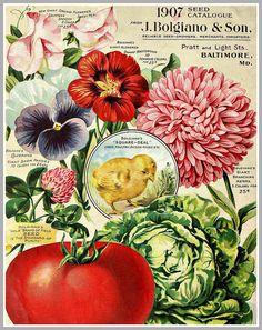 1907 seed catalogue