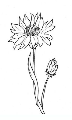 cornflower Free coloring pages