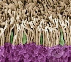 The details in PART of your eye:  Retina rods and cones, SEM.  An accident of nature? Or something to ponder re design?