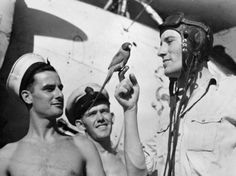 A Fairey Swordfish pilot of 834 Squadron, Fleet Air Arm on board HMS BATTLER with his small pet parrot perched on his finger.