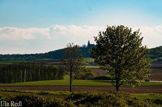 Sunshine and  family: Besuch bei Sonja Vineyard, Outdoor, Landscapes, Outdoors, Vine Yard, Vineyard Vines, Outdoor Games, The Great Outdoors