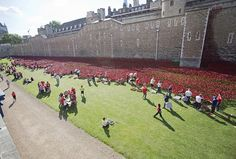 Remembrance: Each of the poppies represents a British life lost during the First World War, as the centenary of the conflict is marked this year