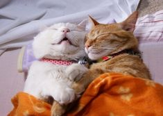 Super Cute Animals Showing Affection