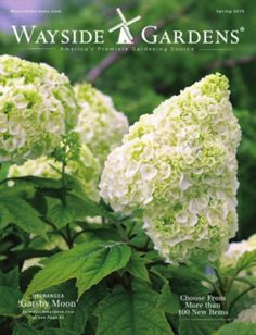 69 Free Seed and Plant Catalogs: Wayside Gardens Plant Catalog
