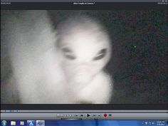 Search Grey alien caught on camera. Aliens And Ufos, Ancient Aliens, Grey Alien, Strange Events, Alien Abduction, Very Scary, Close Encounters, Ufo Sighting