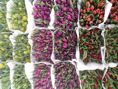 Flower Market (bulbs and flowers) - Amsterdam, The Netherlands