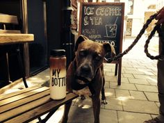 dog and coffee, cracow, poland - Kawalerka https://www.facebook.com/Kawalerka-1460346290884277/?fref=ts