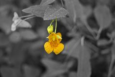 Orange by Caleb Miller, via 500px