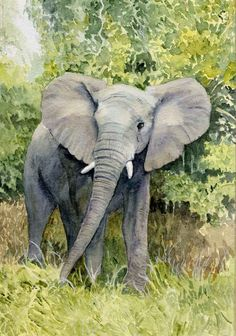 Elephant. A watercolour by Sylvia Twiss