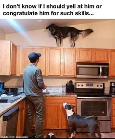 You are in the right place about Animal Memes monkey Here we offer you the most beautiful pictures about the harry potter Animal Memes you are looking for. When you examine the part of the picture you Cute Animal Memes, Animal Jokes, Cute Funny Animals, Funny Animal Pictures, Cute Baby Animals, Funny Cute, Funny Photos, Funny Dogs, Stupid Memes