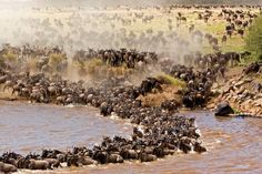 Tanzania and Kenya Launch Aerial Count of Elephants and Buffaloes in their ecosystems