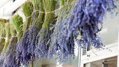 Filléres trükk, ami tényleg mûködik: így vedd fel a harcot a kártevõk és a gyomok ellen   Agrárium, mezőgazdaság és élelmiszeripar Dandelion, Flowers, Plants, Dandelions, Plant, Taraxacum Officinale, Royal Icing Flowers, Flower, Florals