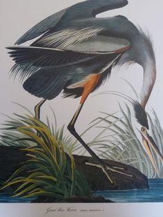 Love Audobon prints.  Love birds.