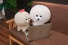 Here are 7 Cutest Bichon Frise Gifts for Bichon Frise Lovers - you can order for yourself or gift your Bichon Frise loving friends. Our collection of Bichon Frise gifts includes accessories, ornaments, home decor and lots more Bichon Frise merchandise. Cute Cushions, Cushions On Sofa, Baby Sleeping All Day, Dog Lover Gifts, Dog Lovers, Soft Toys Making, Cute Christmas Gifts, Bichon Frise, Cushion Covers