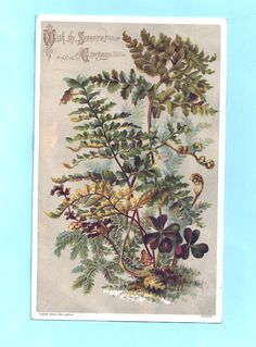 Victorian New Year card. Ferns and leaves. Raphael Tuck & Sons | eBay